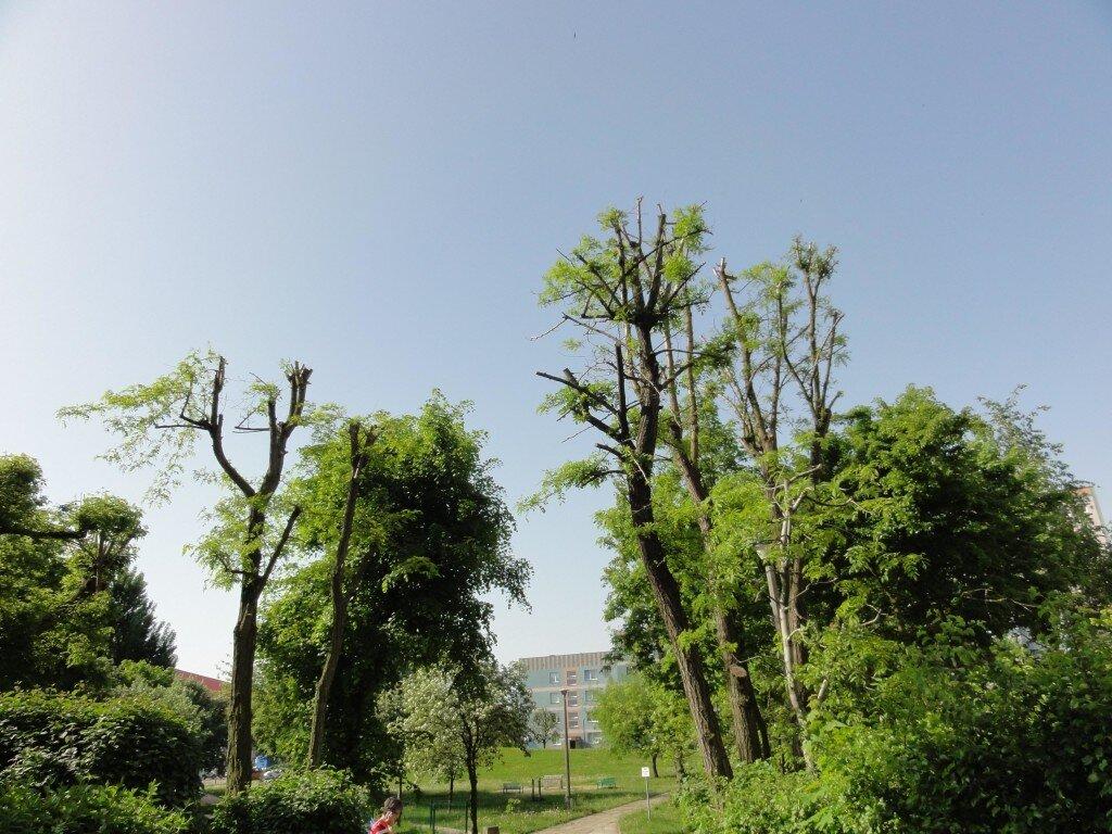 drzewa_zycie_2